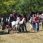 lovaskocsi verseny egyik résztvevője