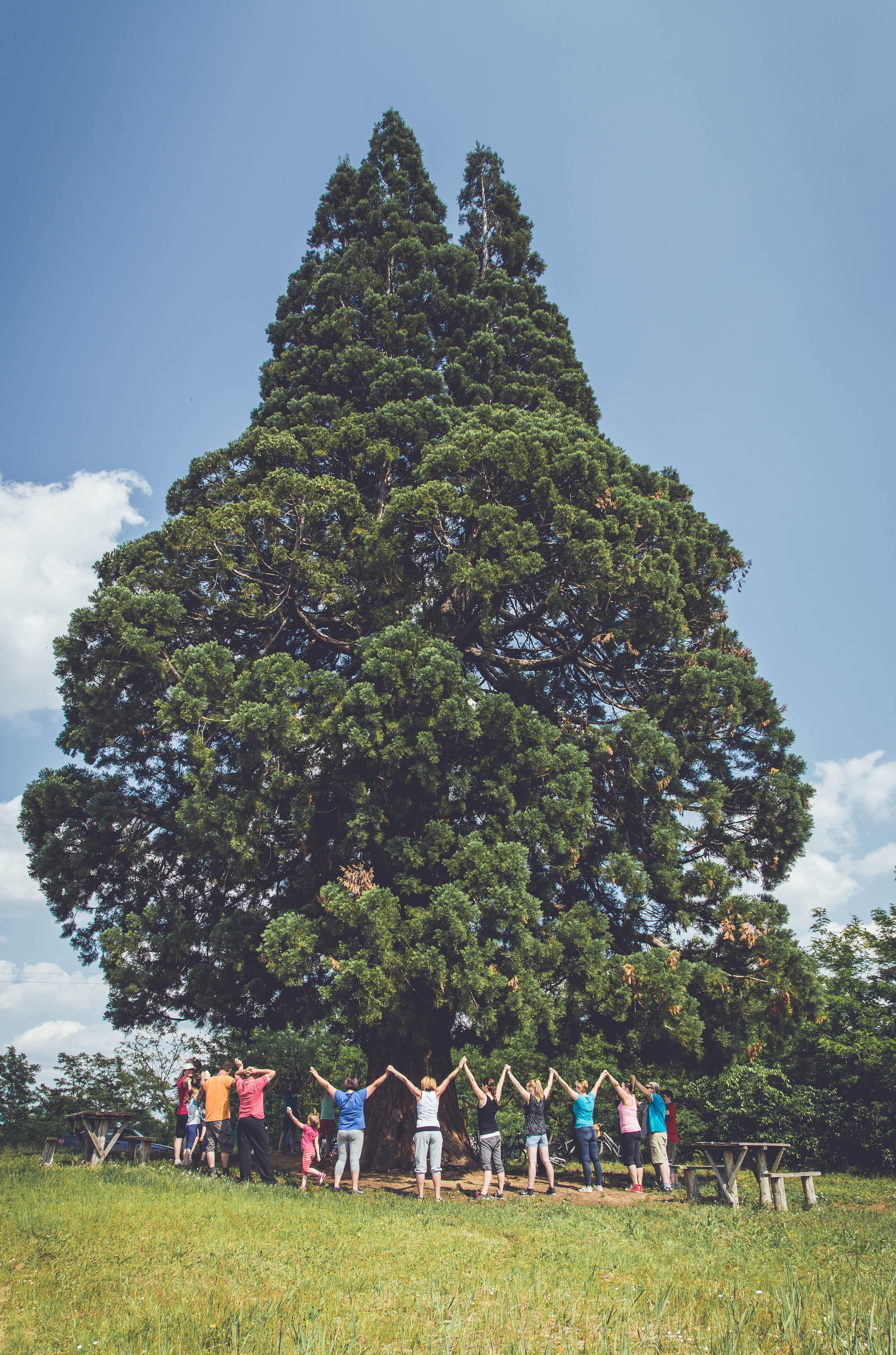 A mi fánkat körbefogja sok felnőtt és gyeremek